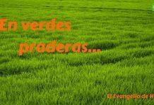 5 verdes praderas