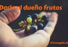 Dar duenio frutos
