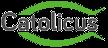 Catolicus